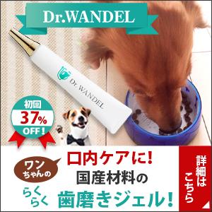 愛犬の口腔ケアジェル【ドクターワンデル】のコツ