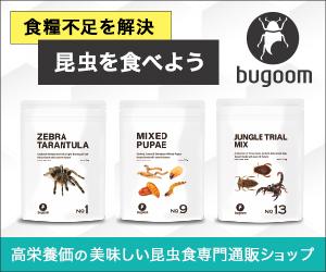 人間が食べれる昆虫!美味しい昆虫食専門通販【bugoom(バグーム)】は答えを知っている